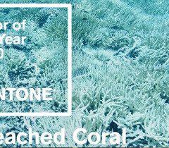 Bleached Coral, culoarea anului 2020